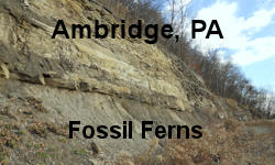 Ambridge Fossil Fern Site