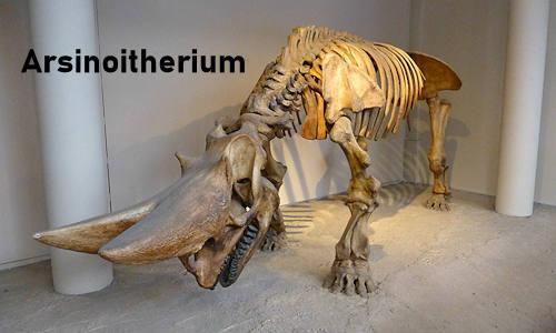 Arsinoitherium Facts