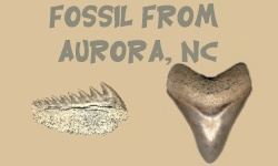 Aurora, North Carolina Fossil Identification
