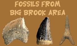 Big Brook Fossil Identification Site