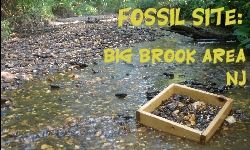 Big Brook Fossil Site