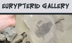 Eurypterid Facts and Information