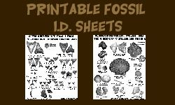 Fossil ID Sheets