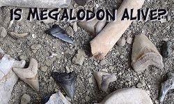 Is Megalodon Alive Today?