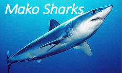 Mako shark facts