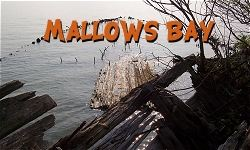 Mallows Bay Ship Graveyard