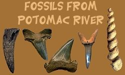 Potomac River Fossil Identification