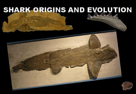 Shark Origins and Evolution