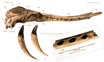 Parts of Sharks that Fossilize