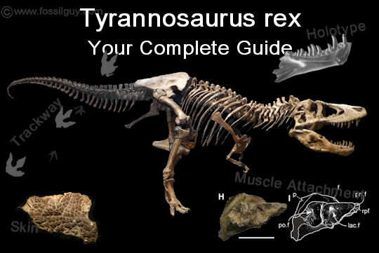 Tyrannosaurus rex facts and information