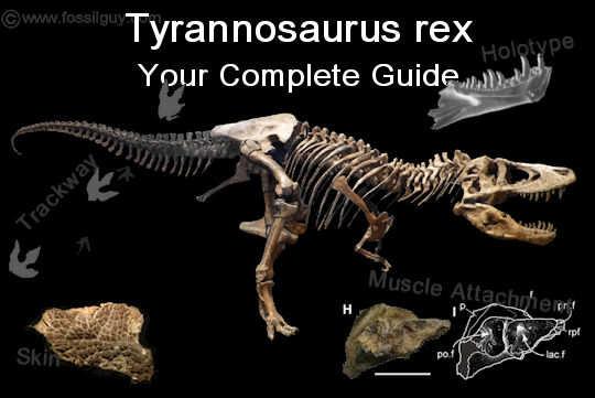 Tyrannosaurus Guide