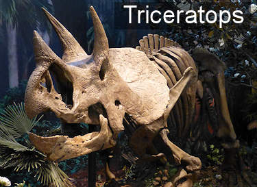 Triceratops Facts