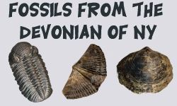 Fossil Identification from the Devonian of Western New York