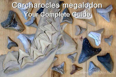Megalodon Shark Facts