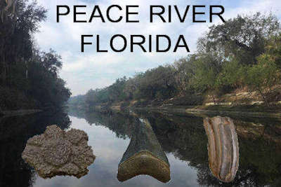 Florida Rivers Map.Fossilguy Com Peace River Fossil Hunting Shark Teeth And Ice Age