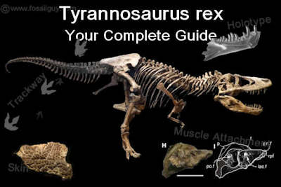Tyrannosaurus Rex Facts