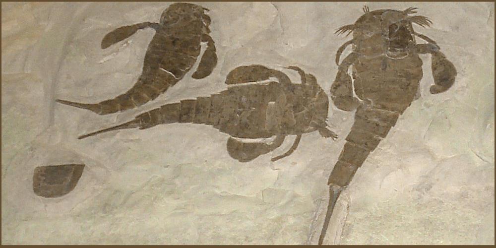 Fossilguy com: Eurypterid fossils (Sea Scorpions): Facts