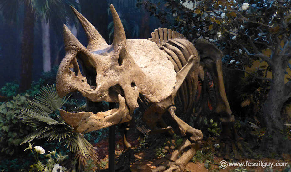 fossilguy com triceratops dinosaur facts and information all