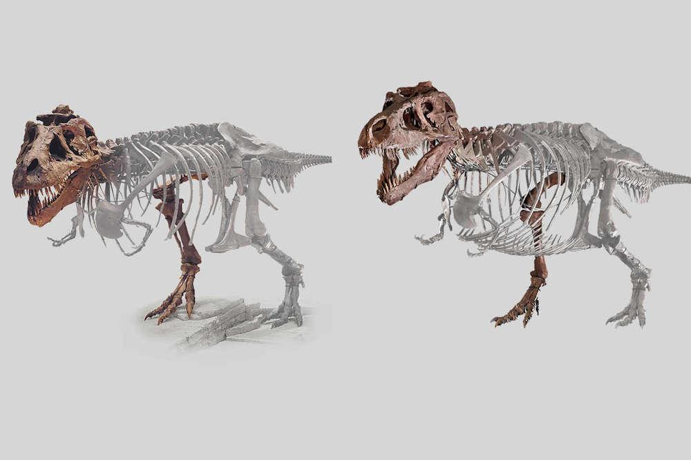 Fossilguy com: T-Rex: Tyrannosaurus Dinosaur Facts and