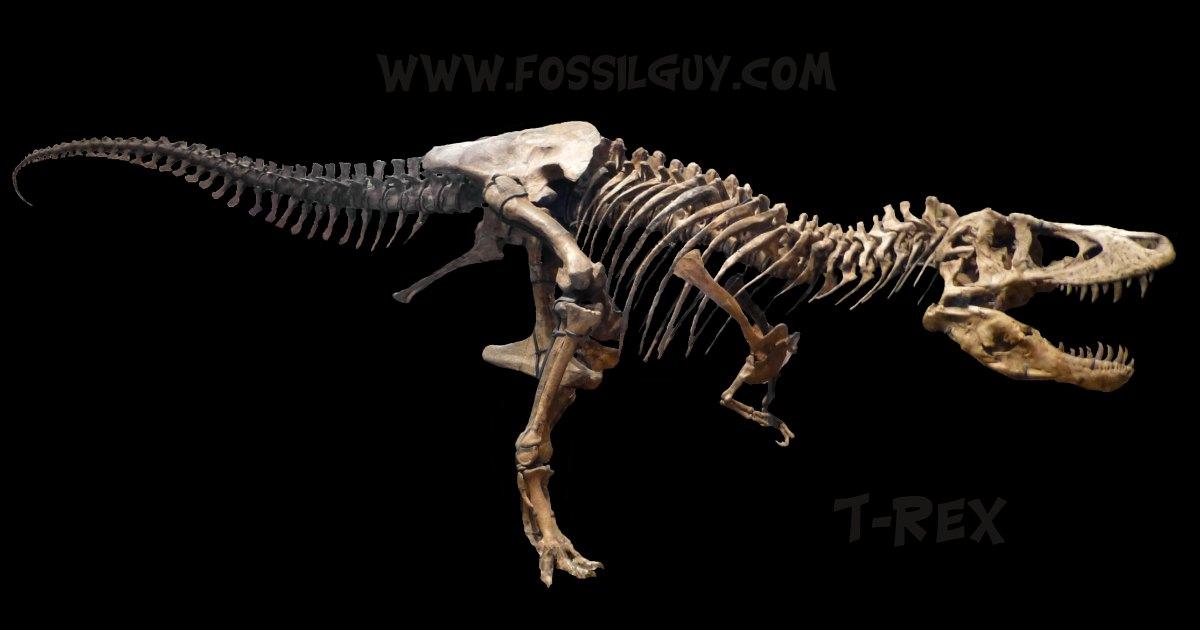 T rex tyrannosaurus dinosaur facts and for Tyranosaurus rex