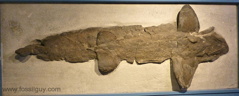Fossilguy.com: Prehistoric Sharks - Shark Origins and ...