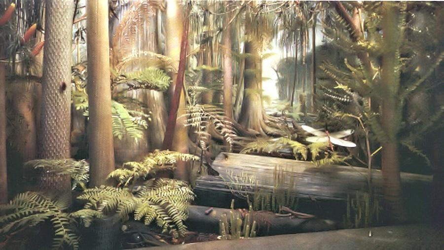 Fossilguycom Carboniferous Fossil Fern Identification