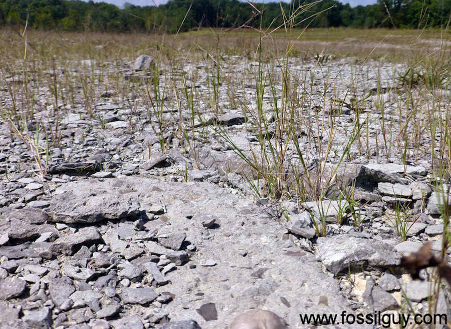 Fossil Collecting at Caesar Creek State Park, Ohio
