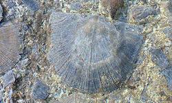 Caesar Creek Fossil Identification