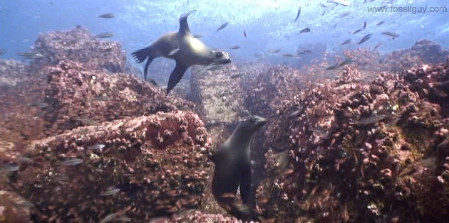 Sea Lions at the Galapagos