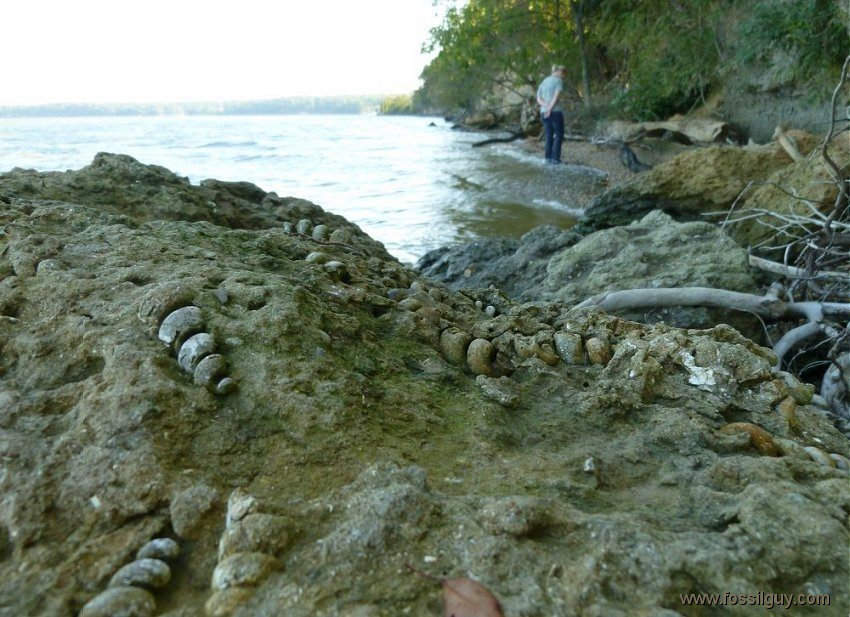 Fossil shark teeth hunting on the Potomac River - Fossil ...