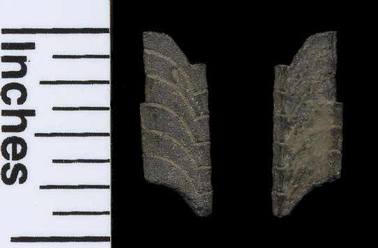 Fin spine fragment from some type of Tarpon.  From the Nanjemoy Formation, VA.