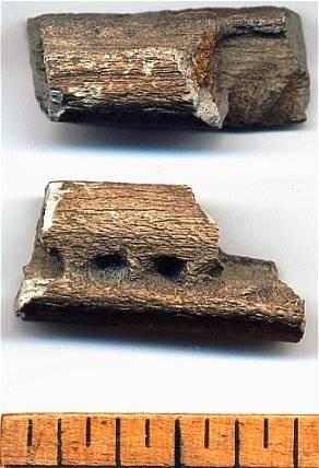 Fossil Eurhinodelphis Jaw Section
