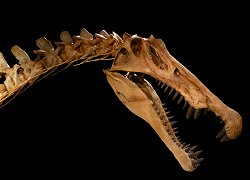 Spinosaurus Facts and Information