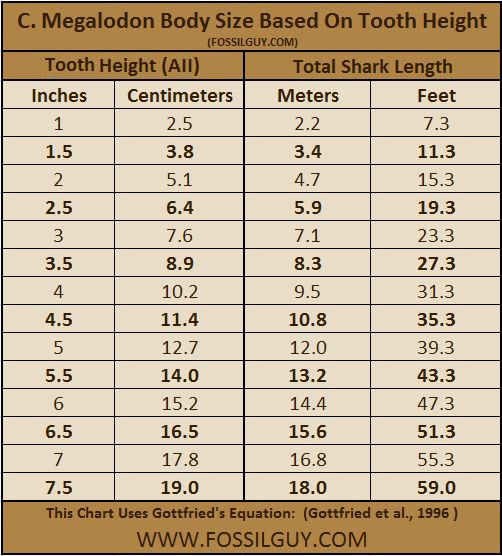 shark size comparison chart car interior design. Black Bedroom Furniture Sets. Home Design Ideas