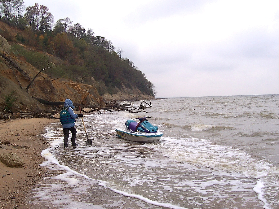 Calvert Cliffs Fossil Trip - Maryland/Virginia; November 2007 ...