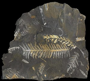 What is a Fossil? Facts about fossil formation, types of fossils ...